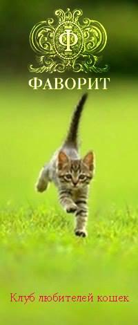 Клуб любителей кошек «Фаворит»