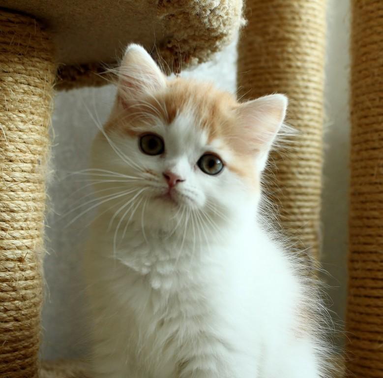 Международная выставка кошек и котов