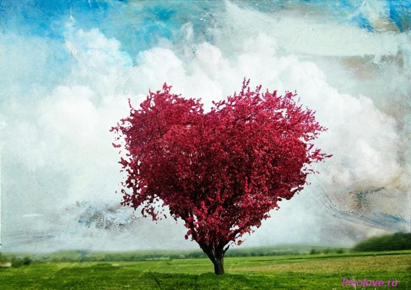 «Верное, любящее сердце»: библиографический обзор