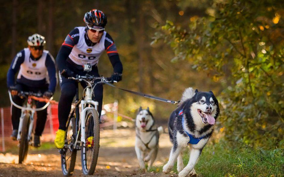 Гонки на собачьих упряжках «Мы-команда!»