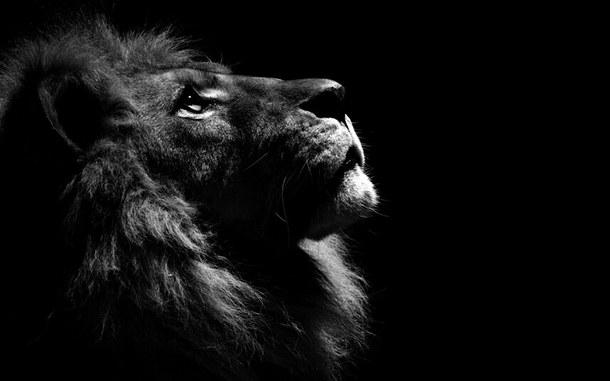 «Кричащие львы»-видеоролики арт-рекламы
