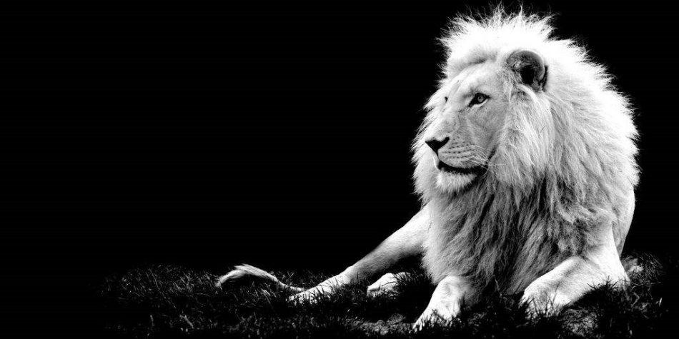 «Кричащие львы-2»