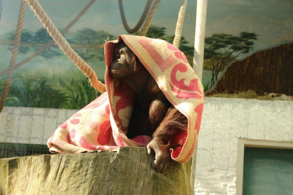 Другой зоопарк — Прогулка с директором