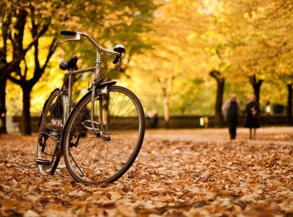 Янтарный велозаезд