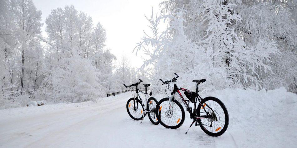Велопрогулка «В зимний лес»