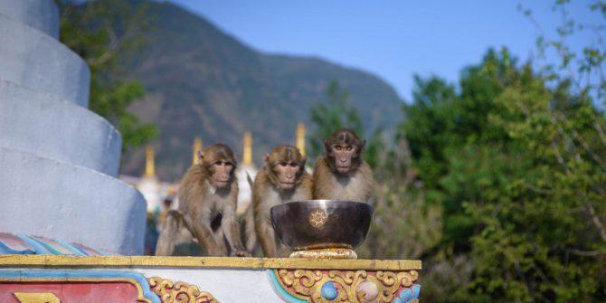 Китайская чайная церемония и тибетские поющие чаши