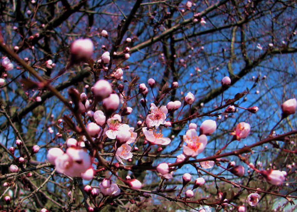 Праздник Весны и Труда в Центральном парке