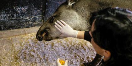 Экскурсия «Другой зоопарк»