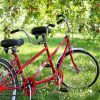 Велопрогулка «в поисках заброшенного яблочного сада»