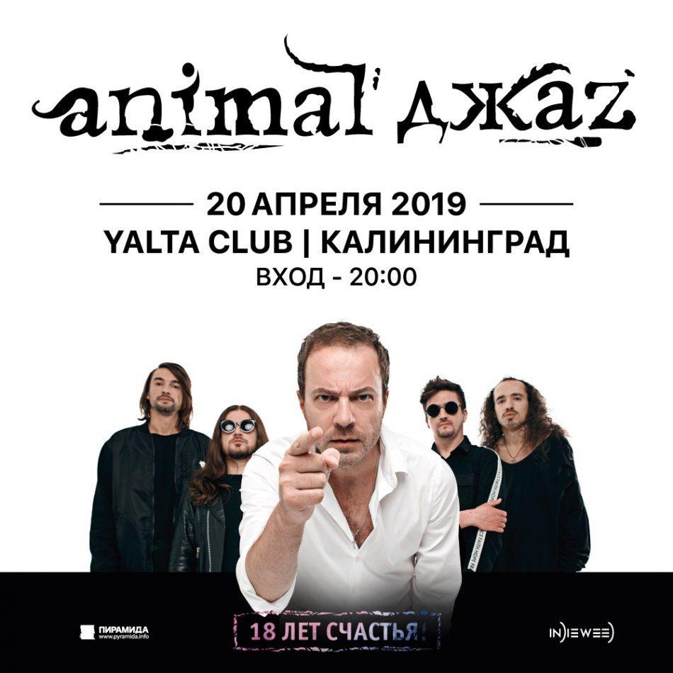 Animal Джаz. Концерт