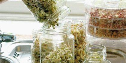 Микрозелень и проростки в домашних условиях